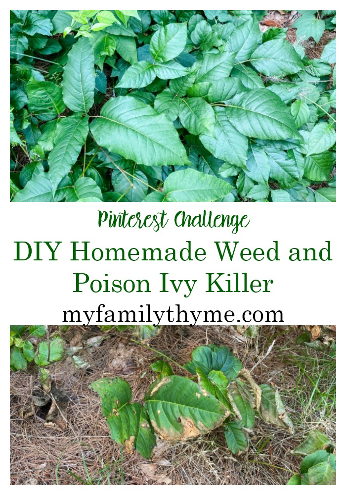 https://myfamilythyme.com/wp-content/uploads/2020/07/poison-ivy-pin.jpg