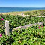 Planning a Summer Porch Refresh with Birch Lane